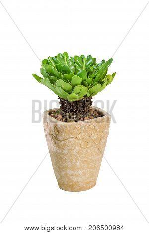 bird nest fern isolated white use for multipurpose