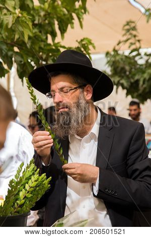 JERUSALEM, ISRAEL - OCTOBER 16, 2016: Traditional market before the holiday of Sukkot. Religious middle-aged Jew with gray beard is concentrating on checking ritual plant myrtle