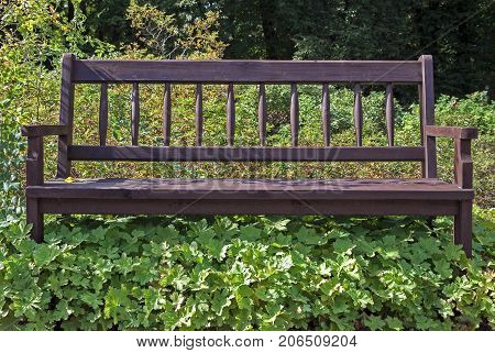 Empty bench in the park overgrown with weeds
