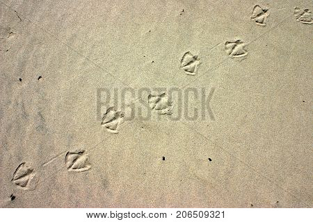 High contrast on the sand with bird paw prints natural background