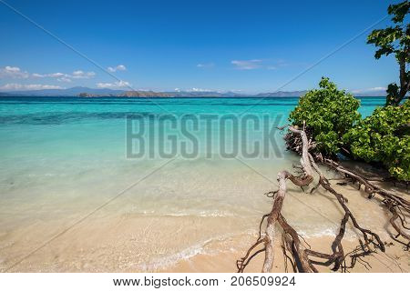 White sand beach with tree in Kanawa Island Flores Sea East Nusa Tenggara Labuan Bajo Indonesia