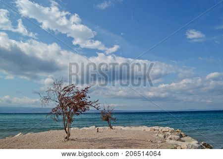 Panoramic sea view whit tree under the clear blue sky