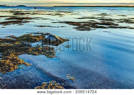 Sunset In Rimouski, Quebec By Saint Lawrence River In Gaspesie Region Of Canada With Rocks In Shallo