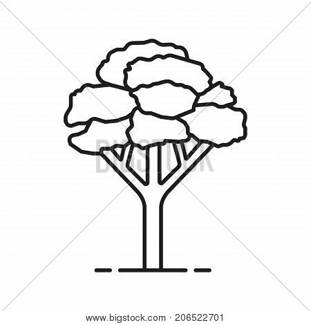 Maple tree linear icon. Forestry thin line illustration. Forest tree contour symbol. Vector isolated outline drawing