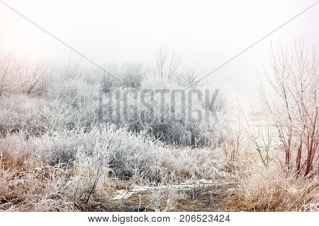Morning mist (fog) and hoarfrost - hoar on tree and bush, winter landscape