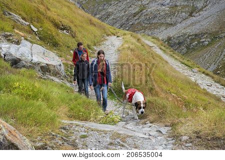 GREAT ST. BERNARD PASS, ITALY, SWITZERLAND - september 04: hike with the saint bernard dog, bred for centuries in hospice of Great St. Bernard Pass on september 04, 2017, border between Italy and Switzerland