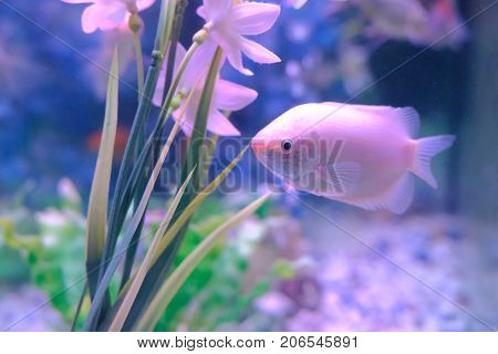 aquarium colourfull fishes in dark deep blue water.