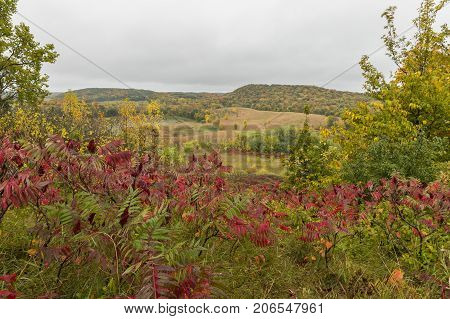 Fall Country Scene - A scenic hilly autumn landscape.