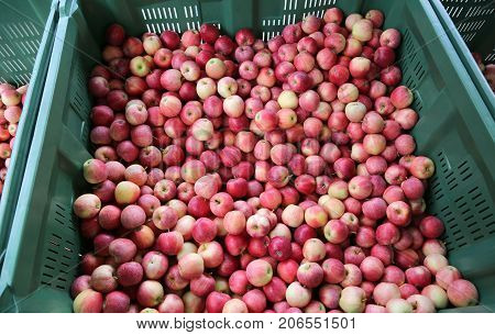 Red Apples Inside The Container For Sale In The Fruit Market