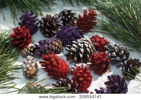 Background of nature winter decoration. Colorful strobilas with pine on white backdrop, close up. Christmas and New Year holidays, celebration and decor concept