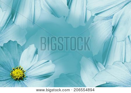 Floral turquoise-white beautiful background. Flower composition. White-turquoise flower daisy. Petals of flowers close-up. Nature.