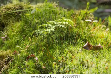 low angle macro shot showing moss plants and other ground cover vegetation