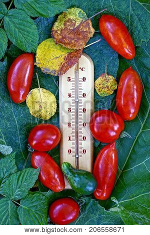 Thermometer with tomatoes and cucumber and dry leaves on a green leaf