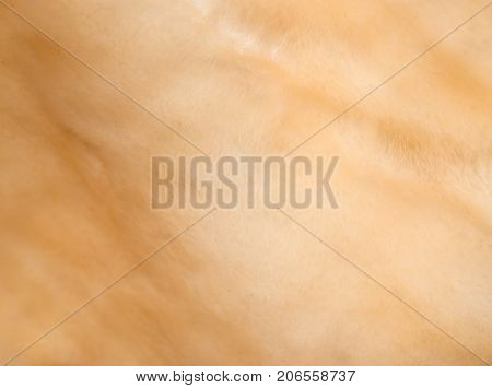 background of fur . Photo of an abstract texture