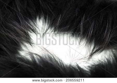 black fur as background . Photos in the studio