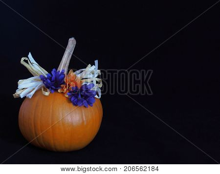 A pumpkin decorated country style with orange and purple bows as well as brown and white paper ribbon against a black background with ample copy space.