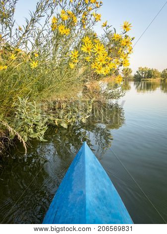Late summer paddling on a lake in northern Colorado - a bow of racing stand up paddleboard and yellow sunflowers