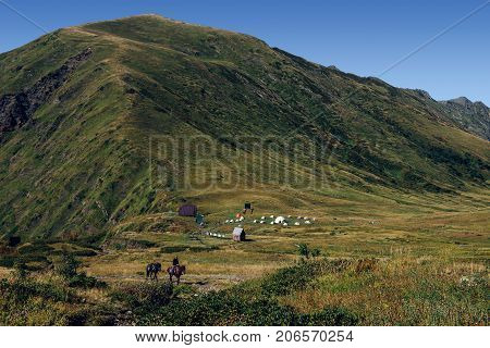 Many Tents in Tourist Camp in The Mountains and Horses