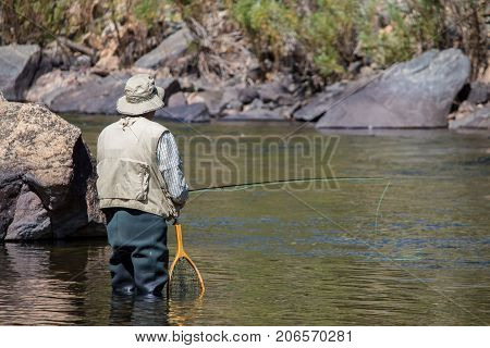 A man in waders fly fishing in the Poudre River in Colorado.