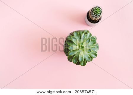Cactus flower and succulent flower on pastel pink background. Flat lay top view minimal concept.