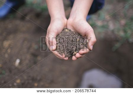 Boy hands are planting the seedlings into the soil. Close-up image of a human's hand. Soil in male hands. Natural in the hand. Two hands of the children are planting the seedlings into the soil.