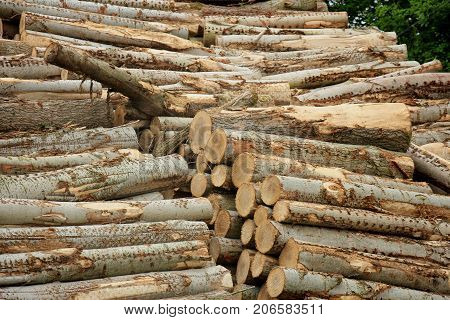 Big piles of chopped fuel wood in a forest