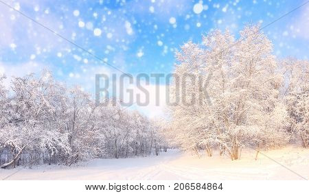 Christmas snowfall in park. Beautiful winter snowy xmas nature. White snowflakes on sunny snowy forest background.
