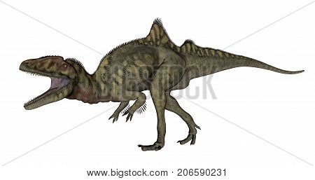 Concavenator dinosaur roaring isolated in white background - 3D render