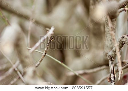 Small brown tree limbs and twigs blur background