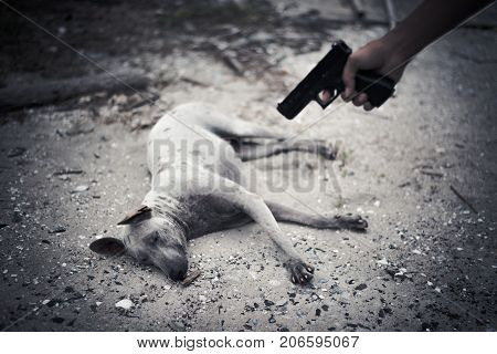 Bad human aim to dog and to kill with hand gun. Animal kill and murder concept Criminal nad outlaw concept Dark tone and vignette