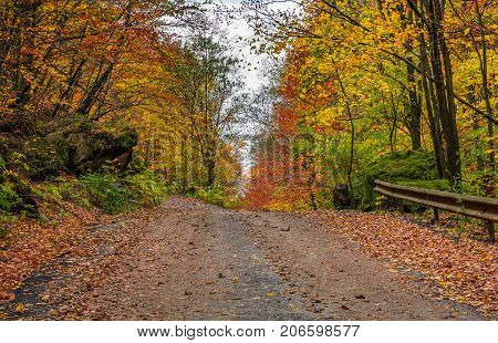 Road Uphill In  Autumn Forest On Overcast Day