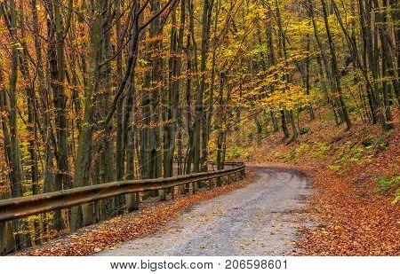 Descend Road Turnaround In Autumn Forest