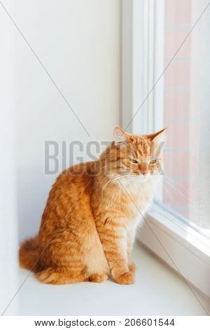 Cute ginger cat siting on window sill and waiting for something. Fluffy pet looks arrogant or disapointed.