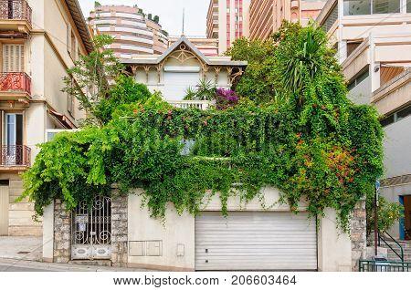 A patch of green in the concrete jungle - Monaco