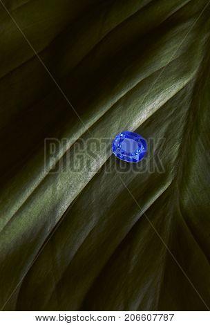 Blue sapphire on dark green leaf. Blue jewelry.