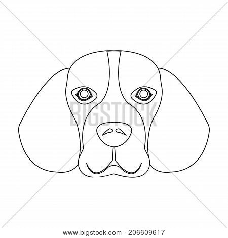 Breed dog beagle..Muzzle beagle single icon in outline style vector symbol stock illustration .