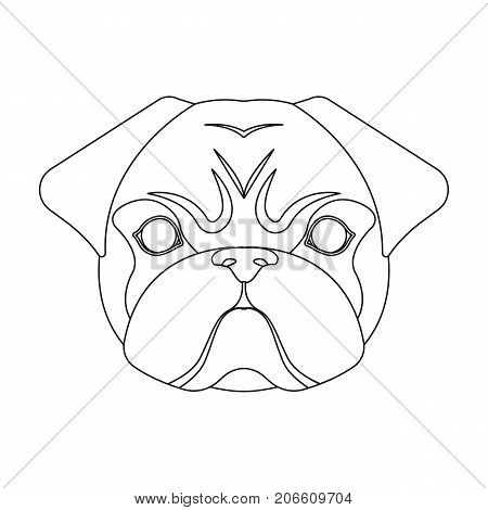 Breed of a dog, a pug.Pug's muzzle single icon in outline style vector symbol stock illustration .