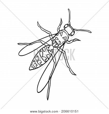 Wasp, hymenopteran insect.Wasp, stinging insect single icon in outline style vector symbol stock isometric illustration .
