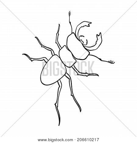 Beetle, arthropodous insect. A beetle with claws single icon in outline style vector symbol stock isometric illustration .