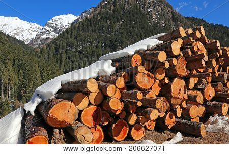 Woodpile Of Logs Cut By Loggers In The Mountains In Winter