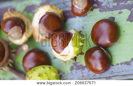 Autumn chestnuts on a wooden painted vintage grunge background with crackles. Horse chestnut - buckeye - for varicose veins.