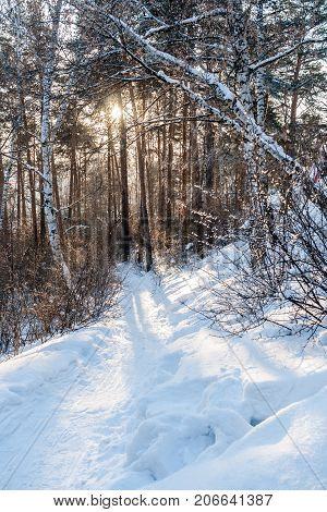 Sun is shining through trees and is lighting pathway in winter forest. Shadows from trees is falling on pathway.