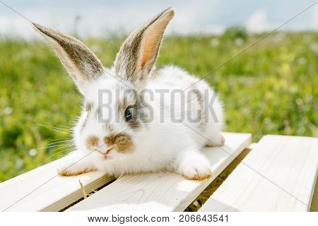 Little Rabbit, Black And White Suit, A Bunny Eating A Green Grass, A Pet In A Wooden Box.