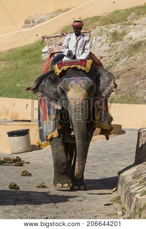 JAIPUR INDIA - SEPTEMBER 18 2017: Unidentified men ride decorated elephants in Jaleb Chowk in Amber Fort in Jaipur India. Elephant rides are popular tourist attraction in Amber Fort.
