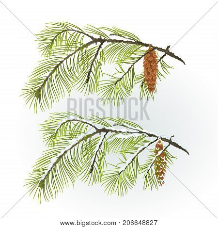 White Pine branch with pine cone autumnal and winter snowy natural background vector illustration