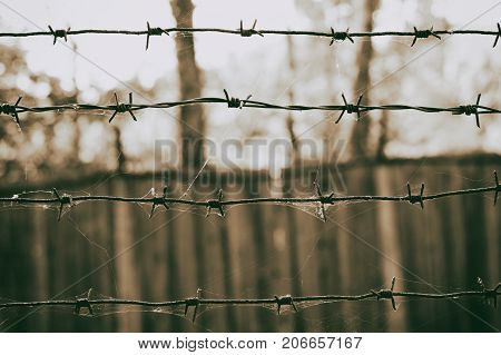 Barbed wire in a web on the background of wooden fence sepia photo