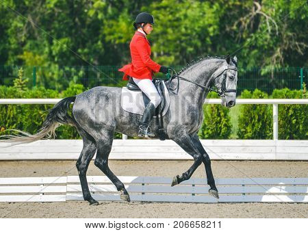 Young elegant rider woman and gray horse, dressage test on equestrian competition. Advanced Dressage test. Horse with girl at dressage equestrian sports competitions. Details of equestrian equipment.