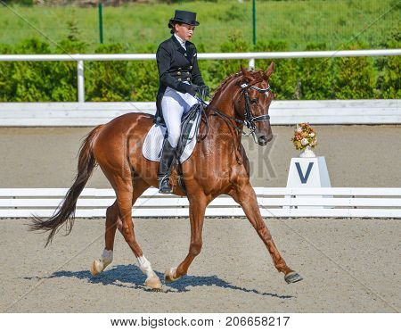 Young elegant rider woman and red horse, dressage test on equestrian competition. Advanced Dressage test. Horse with girl at dressage equestrian sports competitions. Details of equestrian equipment.
