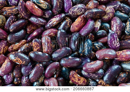 Beans Of Dark Purple Color With Stripes Of Sorts Railroad, Selugia, Idaho Refuge.