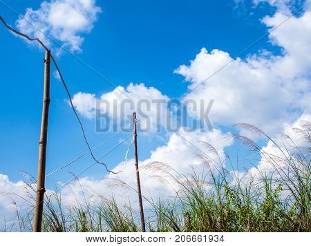 Flower Of Kans Grass Sway In Wind And The Blue Sky And The Temporary Electric Wire